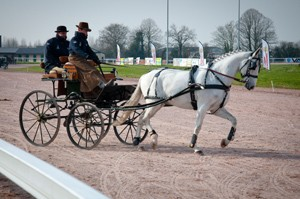 concours attelage hippodrome Lisieux Calvados Normandie